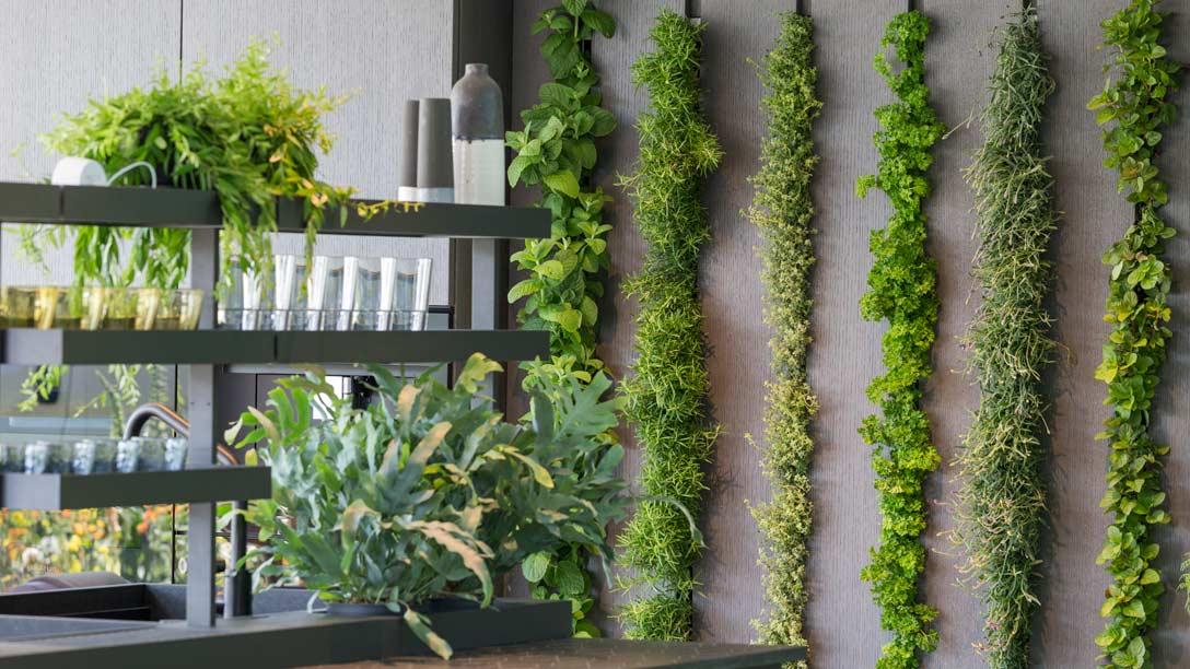 The vertical herb garden in the kitchen area