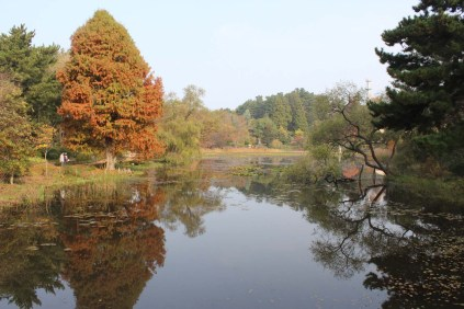 The lake at Chollipo Arboretum