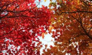 Autumn leaves on Baekhwasan, Taeangun