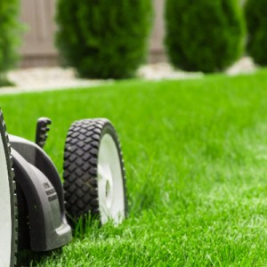 Six basic steps in lawn care