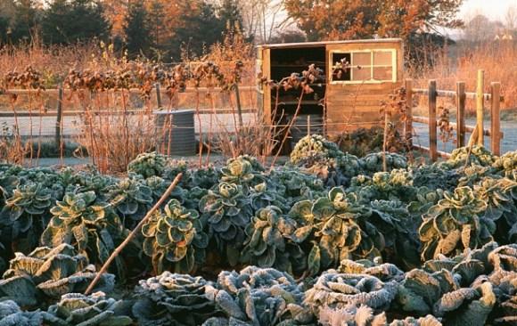 Extend the season for edible crops