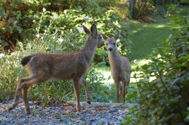 Choosing Deer resistant plants