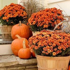 Fall Gardening Tasks