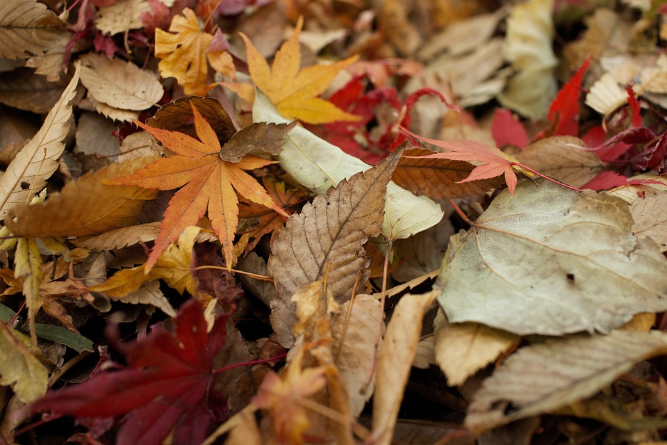 Leave the Leaves –  Less work for you. Better for nature!