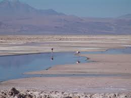 BHP will not be able to extract more water from the Lagunillas aquifer in Chile due to the negative impact it has generated