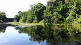 Lilly ponds at Bosherston