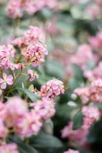 AndreaMai_Flowers-2105