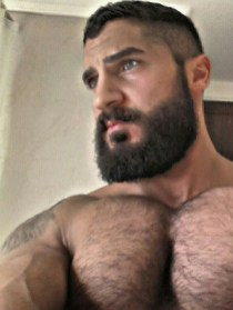 bear-art-hairy-muscle-dad