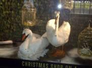 Liberty swans
