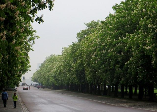 The Chestnut Avenue, Greenwich Park