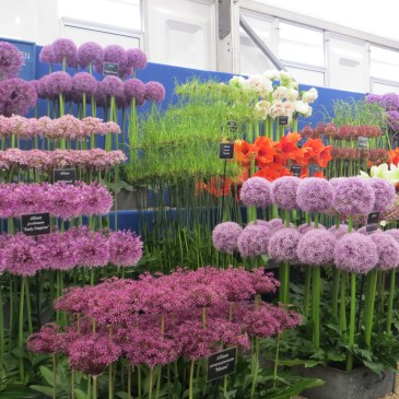 Hampton Court Flower Show continued!