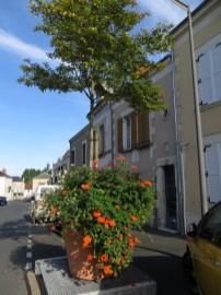 Quiet street with flowers