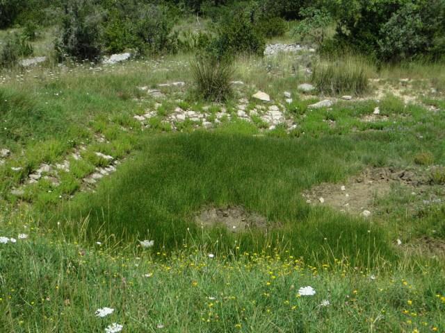An overgrown lavoigne