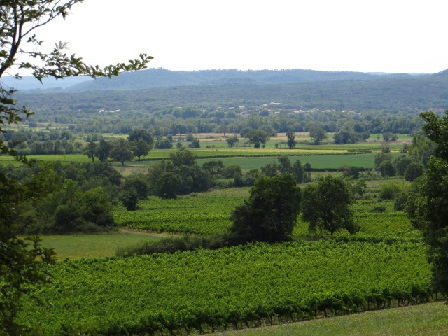 The vineyards of Villeseque