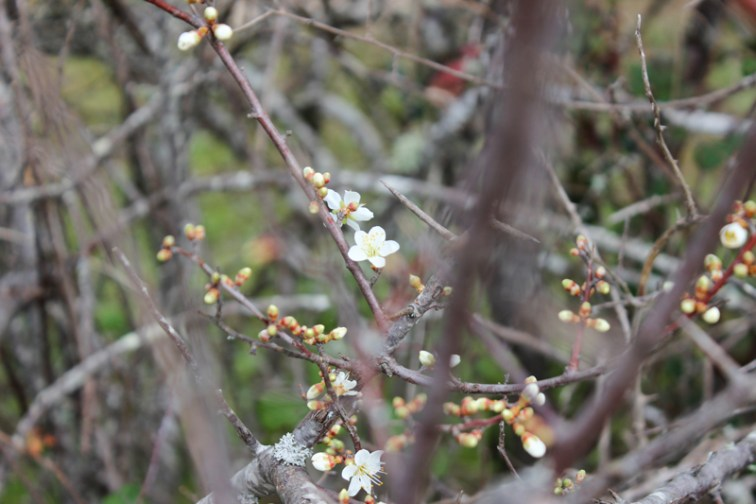 Spring flowers, Flor de Rosa