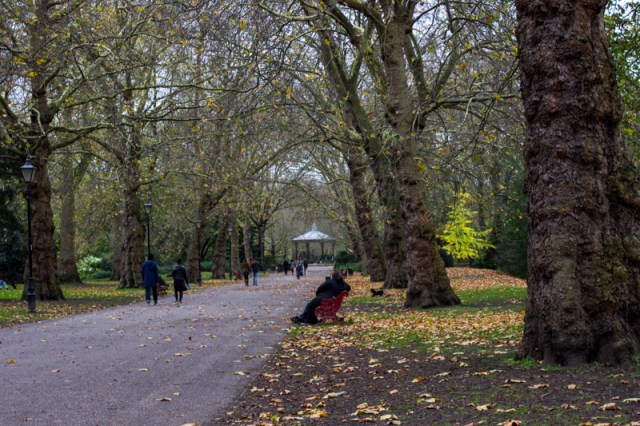 An avenue of London Plane trees leading to the bandstand