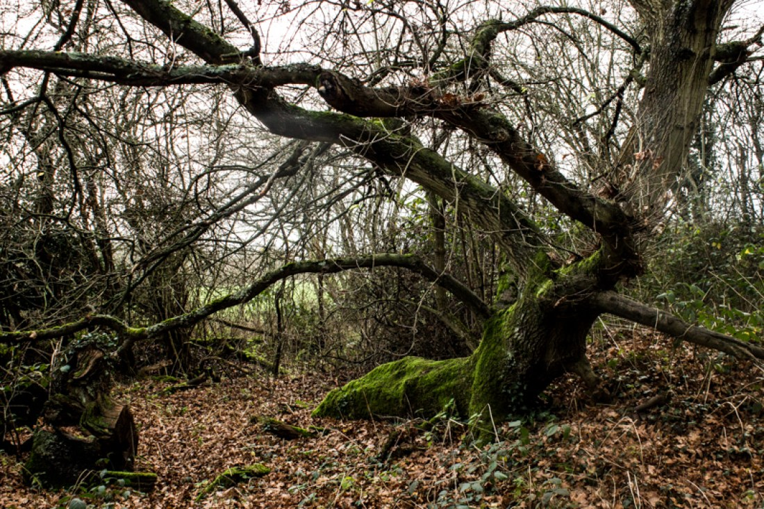 Scrogginhall Wood