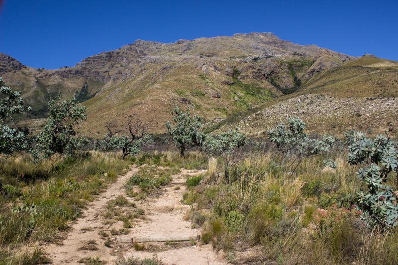 Starting to walk up Sosyskloof in Jonkershoek Nature Reserve