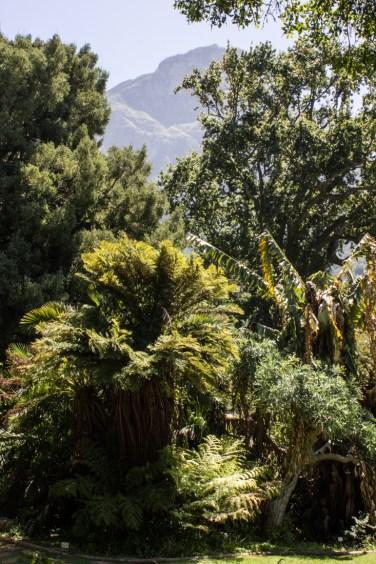 16-2-29 Kirstenbosch LR-2145