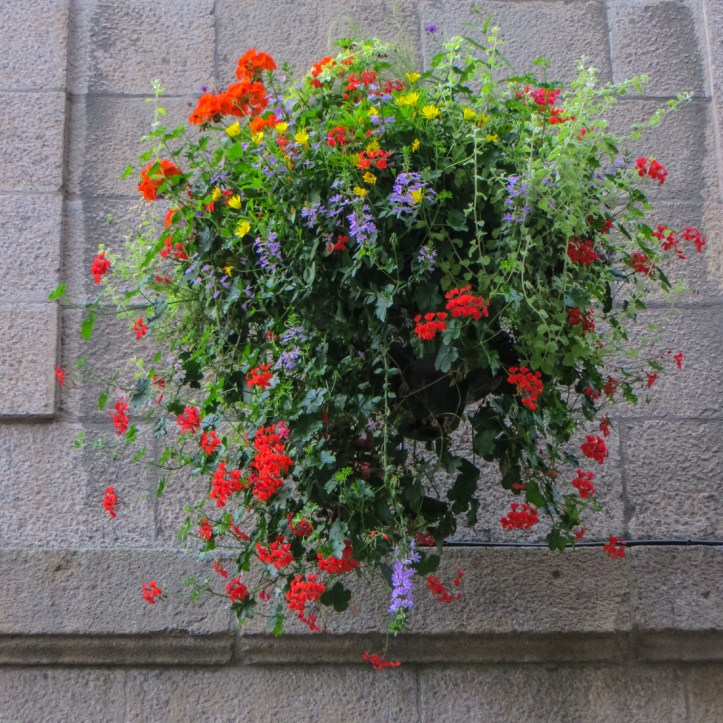 Hanging baskets in St Malo