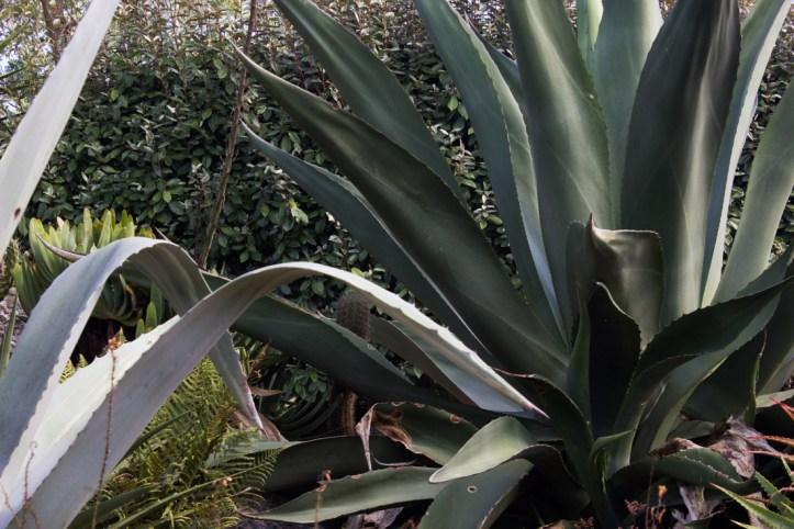 16-9-17-roscoff-exotic-garden-lr-0518