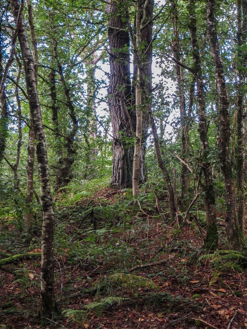 Woods around Lampaul-Guimiliau