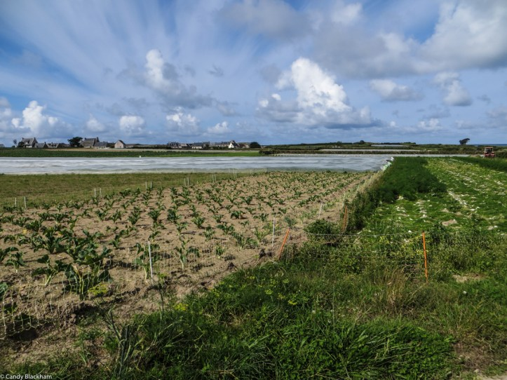 Vegetable farming in the centre of the Island