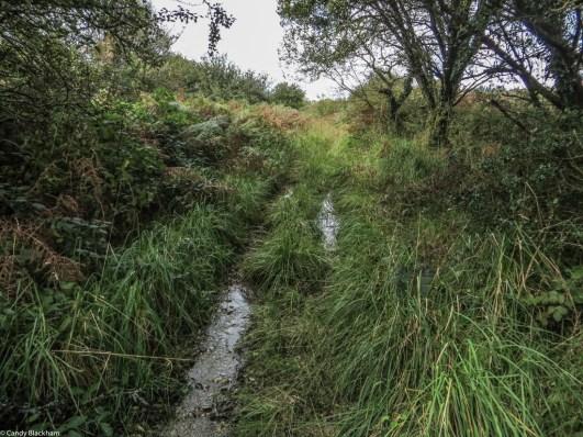 Chemin du Comte, St-Cadou