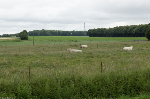 The countryside at Gommecourt Wood New Military Cemetery