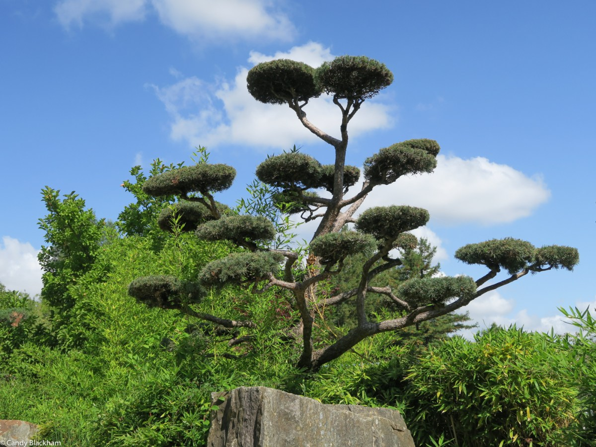 In the Japanese Gardens Nantes