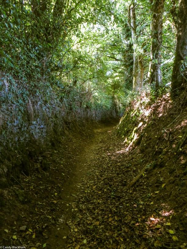The Chouan's Lane