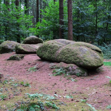 Forests & Megaliths at Camors