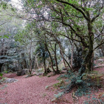 The Hidden Valley of LocEguiner