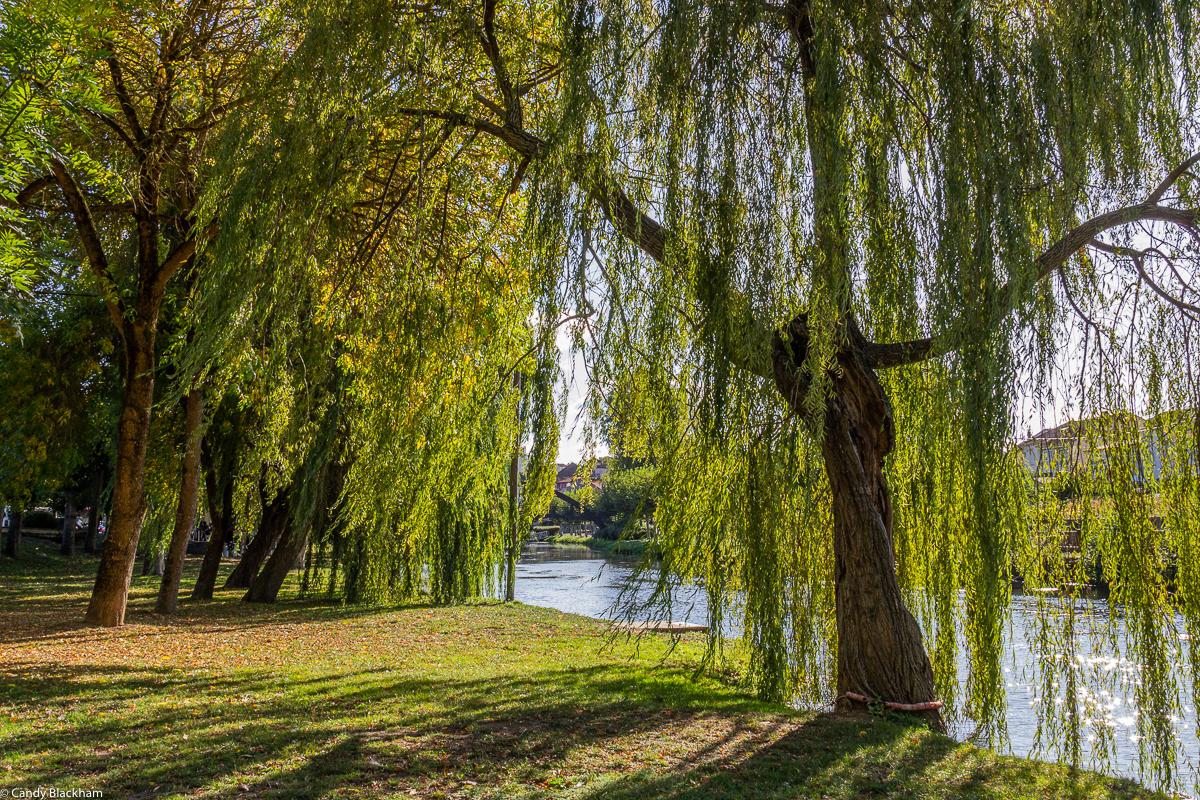 River Park in Monforte de Lemos