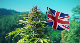 LondonWeed.Net – Top London & UK & Ireland & Scotland & Wales Weed From Spain to your Home Fast & Safe 0034602174422 Whatsapp – sat97800@gmail ...