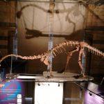 natural history museum img0004