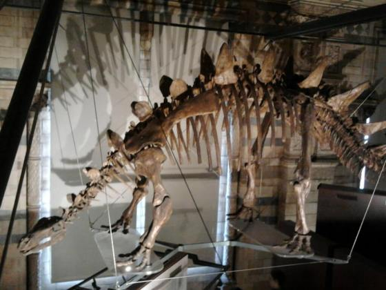 natural history museum img0005