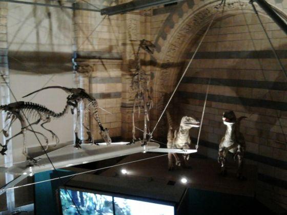 natural history museum img0006