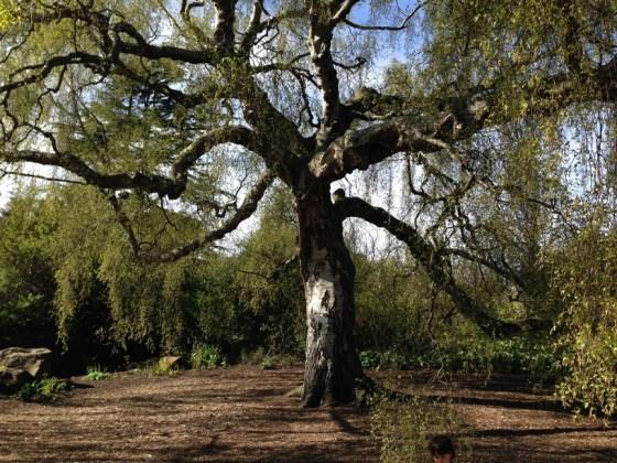 royal botanic garden 001