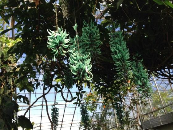 royal botanic garden 003