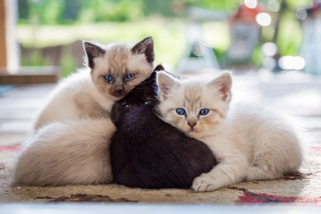 Kittens on the porch