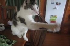 jesse, el gato raro