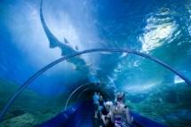 Aquarium Of Western Australia Perth