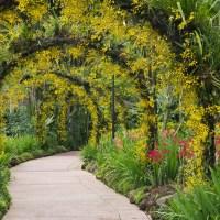 Singapore Botanic Gardens; Lonely Planet