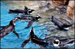 Close: Penguin