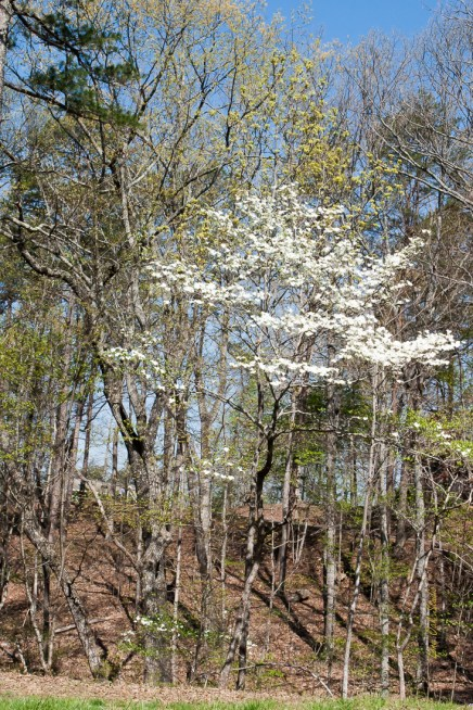 Dogwood on Moosewood