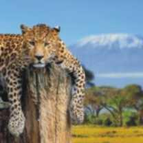 Jaguar-Spirit-Animal-1-150x150