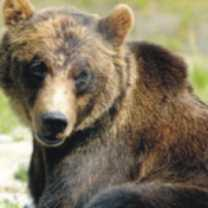 bear-totem-300-150x150