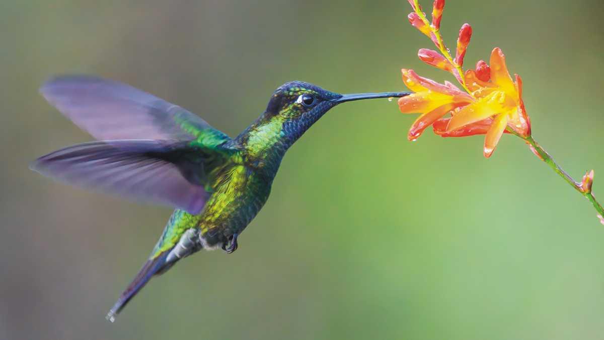 animal spirit hummingbird - hummingbird spirit animal