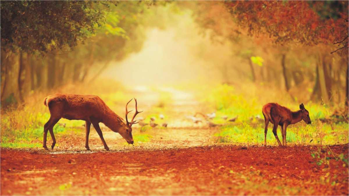 animal spirit deer -- deer spirit animal meaning -- deer spirit animal -- deer as spirit animal